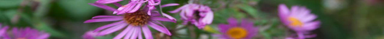 flower_garden_page_footer