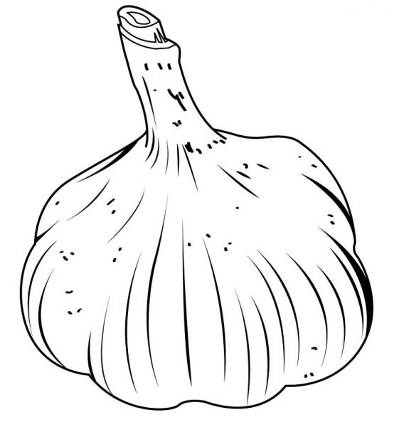 Raw Garlic Bulb