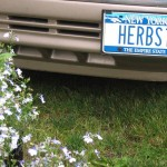 Herbs1 License Plate