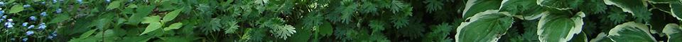 Garden Foliage Footer